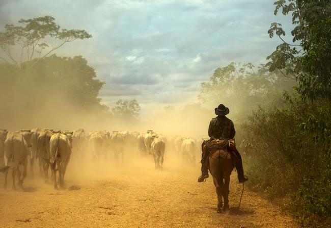 Cowboy cavalgando pela Transpantaneira