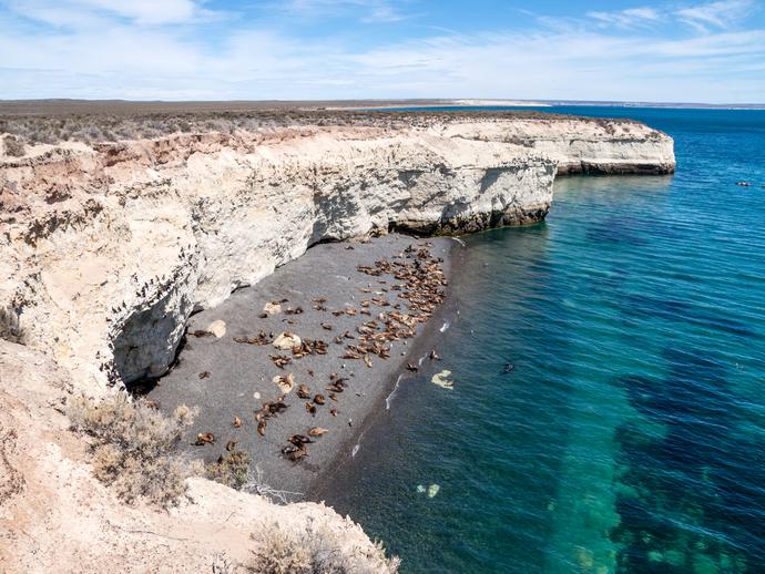 Veja de perto uma colônia de leões marinhos quando visitar Puerto Madryn, na Argentina