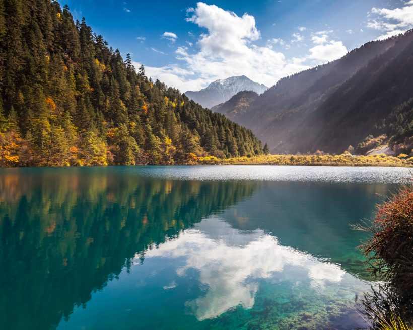 5 florestas incríveis no mundo para quem ama aventuras