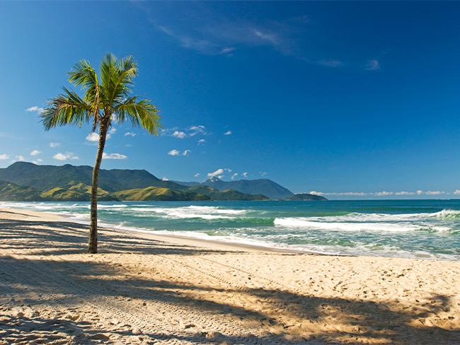 foto de uma praia, com céu limpo e um coqueiro na beira da praia.
